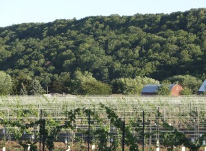 Niagara Escarpment and vineyards